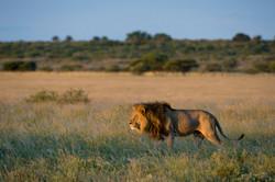 KalahariPlains_WS_BSC_48