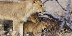Savute_Safari_Lodge_DD_BSC_20
