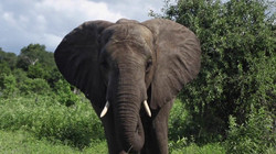 Ngoma_Safari_Lodge_SD_BSC_15