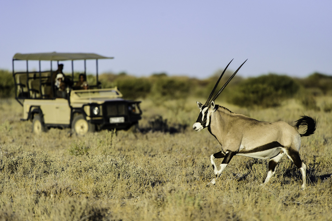 KalahariPlains_WS_BSC_14