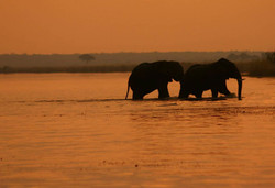 Chobe_Elephant_Camp_BW_BSC_25
