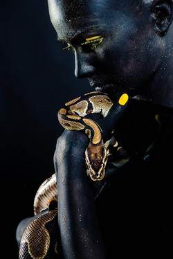 Snake-imagestudio-5892