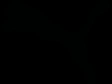 puma-logo-2.png