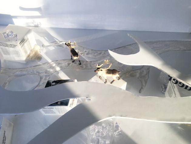 Reindeer Exhibit