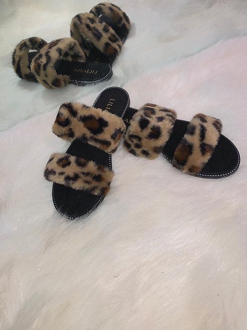 Burr -Leopard