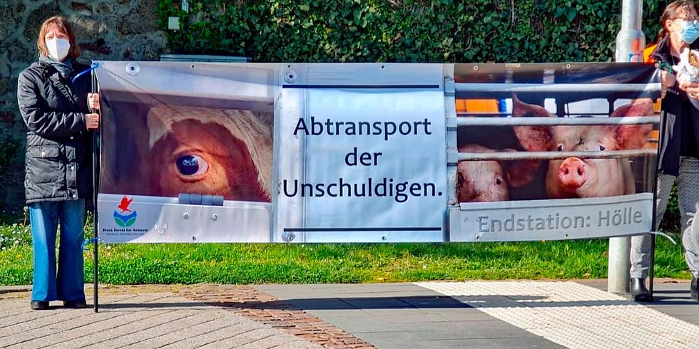 Ampelaktion zum Thema Tiertransporte