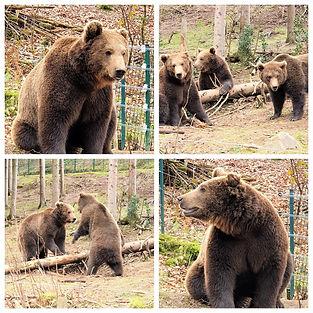 Bärenpark- Kopie.jpg