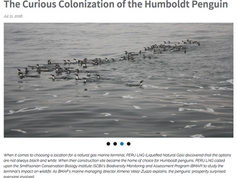 Nota sobre los pingüinos del terminal