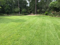 Lawn Care The Woodlands