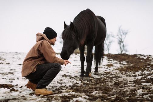 Beziehungsarbeit mit Pferden / Wögerbauer