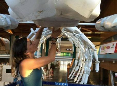 Bióloga transforma em arte lixo que encontra nas praias