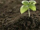 Fertilizer.png