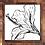 Thumbnail: Hibiscus