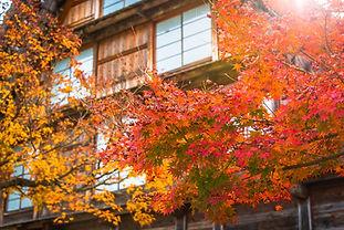 Giappone2.0_Momiji.jpg