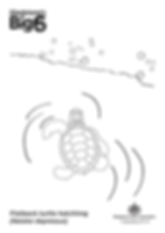 Colour_2_Flatback-turtle-hatchling.png