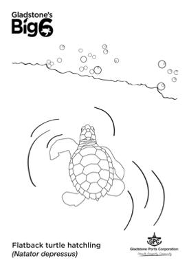 Colour_2_Flatback-turtle-hatchling.png