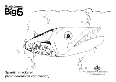 Colour_2_Spanish-mackerel.png