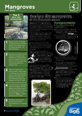 Habitats_Mangroves_Fact-Sheet.png
