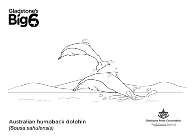 Colour_2_Humpback-dolphins.png