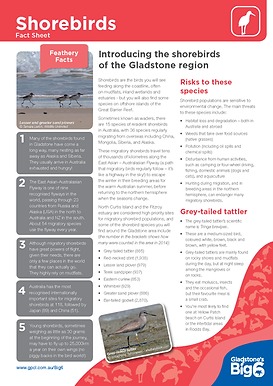 Fact Sheet_Summary_Shorebirds_Final_Page