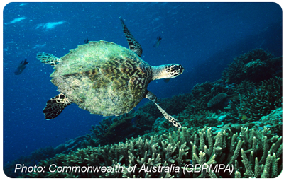 Hawksbill_RoundedCorners_400px.png