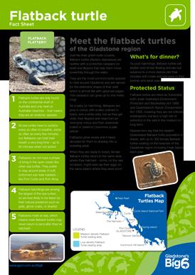Turtles_Flatback_Fact-Sheet.png
