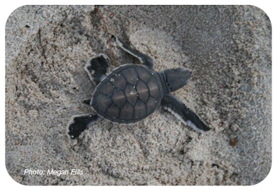 Green-Hatchling-roundedcorners_400corpx.