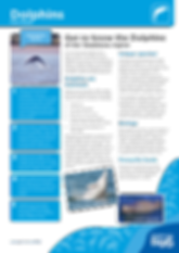 Cetaceans_Dolphins_Fact-Sheet.png