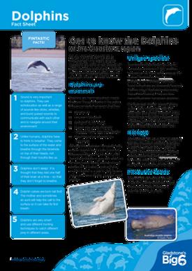 Cetaceans_Dolphins_Fact-Sheet.png