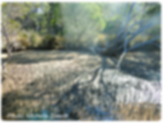 Mangrove-and-Stipa_rounded_400px.png