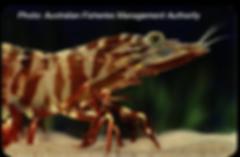 tiger-prawn-400px.png