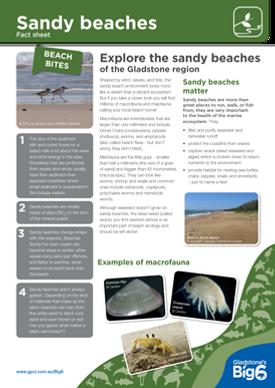 Habitats_Sandy-beaches_Fact-Sheet.png