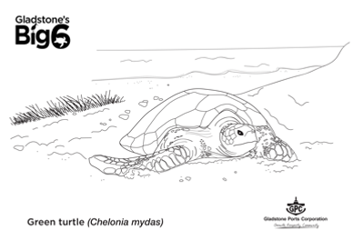 Colour_Green-turtle.png