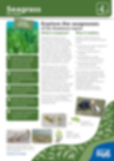 Habitats_Seagrass_Fact-Sheet.png