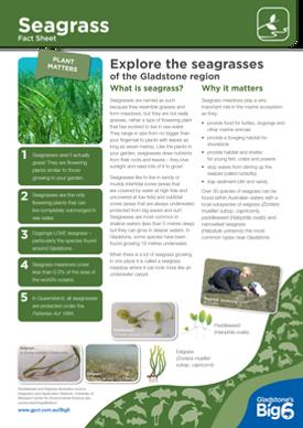 Habitats_Seagrass_Fact-Sheet.png