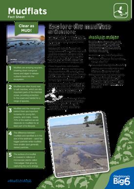 Habitats_Mudflats_Fact-Sheet.png
