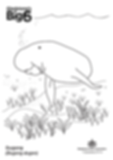 Colour_Dugong.png
