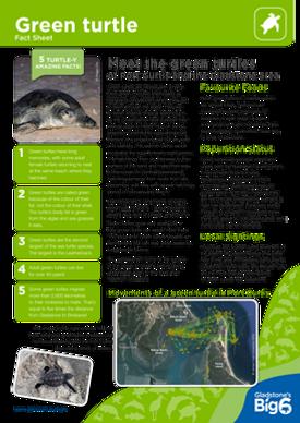 Turtles_Green_Fact-Sheet.png