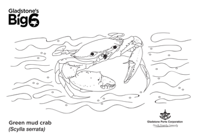 Colour_green-mud-crab.png