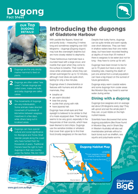Dugong_Fact-Sheet.png