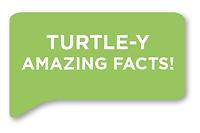 Turtley Amazing.png