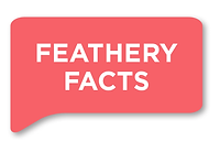 FeatheryFacts.png