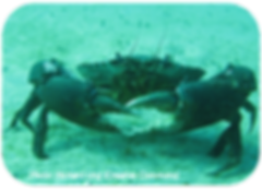 Mudcrab_roundedcorners_400px.png