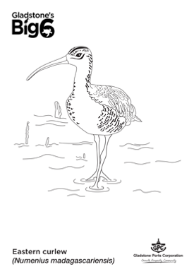 Colour_Eastern-curlew.png