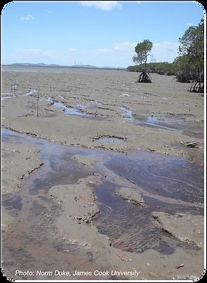 habitats_mudflats_cor400px.png