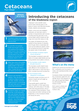 FS_Sum_Cetaceans.png