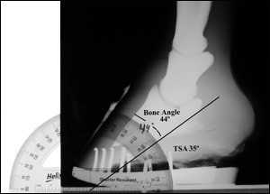 Evaluating the Navicular Bone