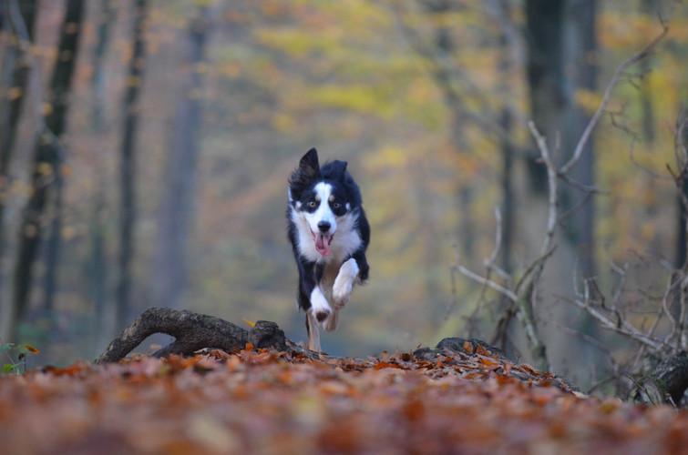 tree-nature-forest-winter-leaf-dog-74630