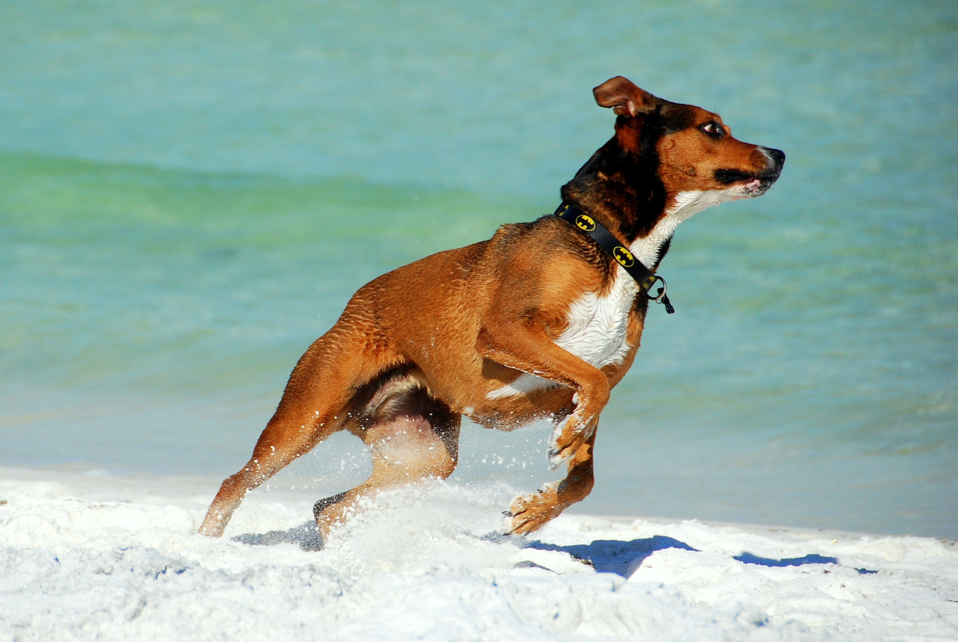 beach-water-nature-sand-ocean-shore-8953