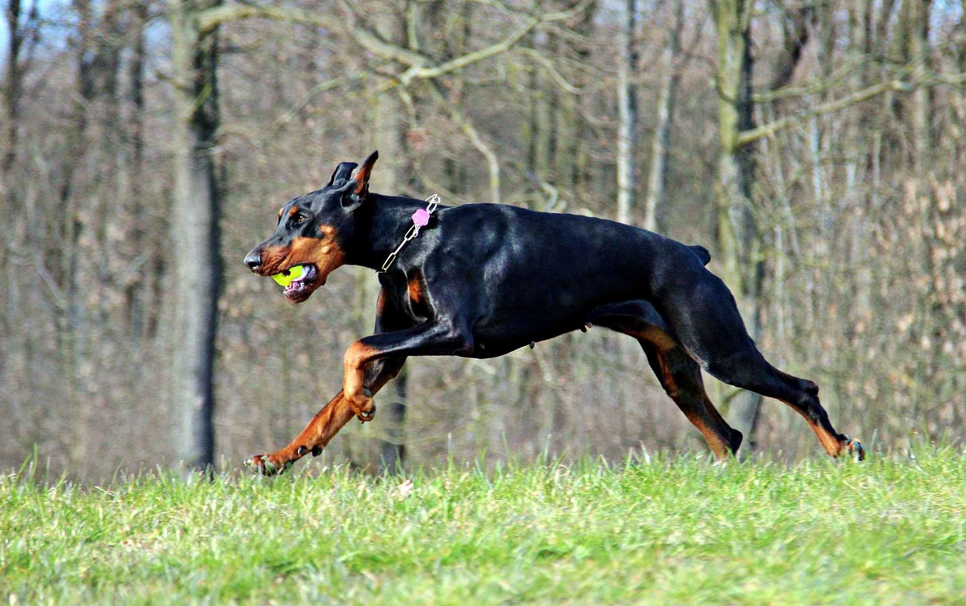 game-running-dog-mammal-outdoors-vertebr